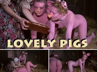 lovely pigs